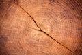 Felled tree Royalty Free Stock Photo