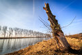 Felled tree by the river in poland beginning of spring Stock Image