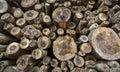 Felled tree trunks pile of Stock Photos
