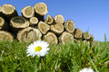 Felled trees stacked up on top of each other in a pile grass and flowers in the foreground Stock Photo