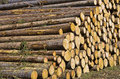 Felled trees, wood harvest Stock Photos