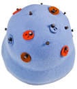 Felt Women's Decorated Cloche Hat