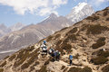 Female backpacker follows horses on everest base camp trail Stock Image