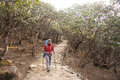 Female backpacker hikes trail through forest en route to everest base camp Stock Photo