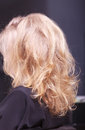 Female blond wavy hair. Back of woman head. Hairdressing salon. Stock Image