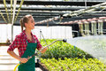 Female commercial gardener watering plants in market gardening or nursery with apron Stock Image