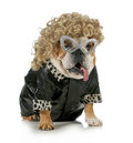 Female dog Royalty Free Stock Photo