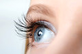 Female eye with long eyelashes close up Royalty Free Stock Photo