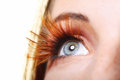 Female eye stylish creative make up false lashes close long brown autumnal colour Stock Photos