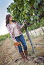 Female farmer inspecting the grapes in vineyard young mixed race wine Stock Images