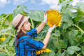 Female farmer in sunflower field Royalty Free Stock Photo
