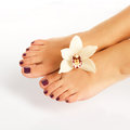 Female feet with beautiful pedicure after spa procedure closeup photo of a on white background Stock Image