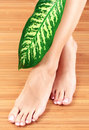Female feet with big green leaf Stock Photography
