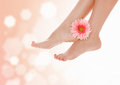 Female feet with pink gerbera flower Stock Photo