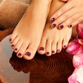 Female feet at spa salon on pedicure procedure closeup photo of a legs in water decoration the flowers Royalty Free Stock Image