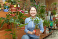 Female florist with ficus plant bonsai at flower store Stock Images