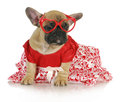 Female french bulldog Royalty Free Stock Photos