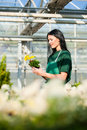 Female gardener in market garden or nursery florist flower shop Royalty Free Stock Photography