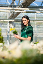 Female gardener in market garden or nursery florist flower shop Stock Photo