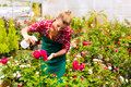 Female gardener in market garden or nursery florist flower shop with roses Royalty Free Stock Images