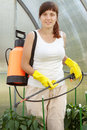 Female gardener spraying pepper  plant Stock Photography