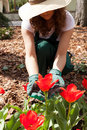Female gardener weeding among flowers in garden Royalty Free Stock Images
