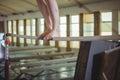 Female gymnast practicing gymnastics on the horizontal bar Royalty Free Stock Photo