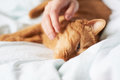 Female hand caress cat red in bed Stock Photos