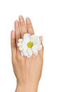 Female hand with flower image of beautiful Stock Images