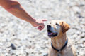 Female hand gives command to a dog Royalty Free Stock Photo