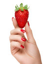 Female hand holding a luscious ripe strawberry isolated on white close up with pretty manicured nails with red nail varnish in Stock Images