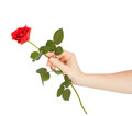 Female hand holding a red rose Royalty Free Stock Photo
