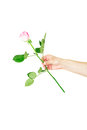 Female hand holding a single red rose isolated over the white background Stock Photos
