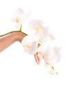 Female hand with orchid flowers Royalty Free Stock Image