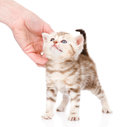 Female hand patting cute kitten. on white background