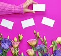 Female hand in pink sweater holding a blank white paper business card Royalty Free Stock Photo