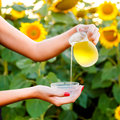 Female hand pours sunflower oil from a jug into a bowl. Royalty Free Stock Photo