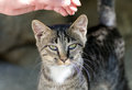 Female hand stroking head of a cat outdoors Royalty Free Stock Photos