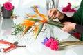 Female hands arranging bouquet close up of flower Stock Photos