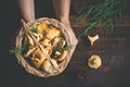 Female hands holding a basket with forest mushrooms chanterelles on a dark background Royalty Free Stock Photo