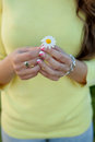 Female hands holding a daisy Royalty Free Stock Photo