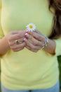Female hands holding a daisy Royalty Free Stock Photo