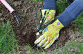 Female Hands Planting a Seedling Royalty Free Stock Photo