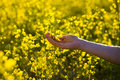 Female hands touching flowers.touch with nature,female hand