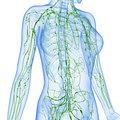 Female lymphatic system of half body anatomy illustration the male Stock Images