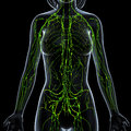 Female lymphatic system x ray anatomy illustration of the Royalty Free Stock Photo