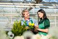 Female and male gardener in market garden or nursery florist flower shop Stock Image
