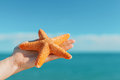 Female palm holding starfish in front of blue sky and sea Royalty Free Stock Photo