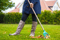Female person raking green grass from brown leaves Royalty Free Stock Photo