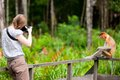 Female photographer and proboscis monkey Royalty Free Stock Photo